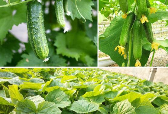 春季一般种植什么蔬菜?