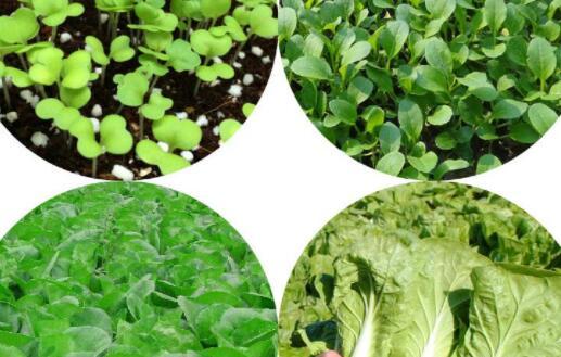 家常蔬菜常见的有哪些品种?