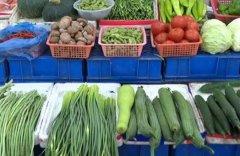 夏季蔬菜什么时候播种品种有哪些?