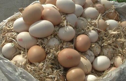 我们常吃的鸡蛋、鸭蛋、鹅蛋都有什么区别?