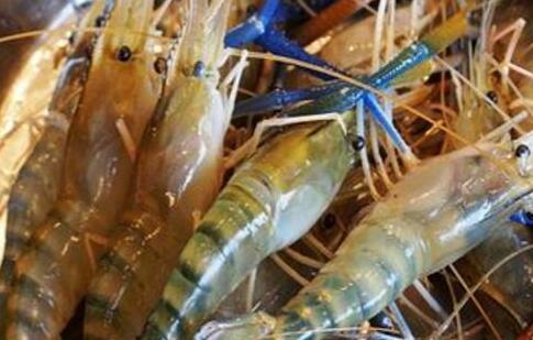 沼虾一般什么时候上市?