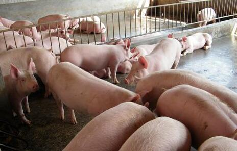 母猪便秘不吃食一般要怎么治疗?