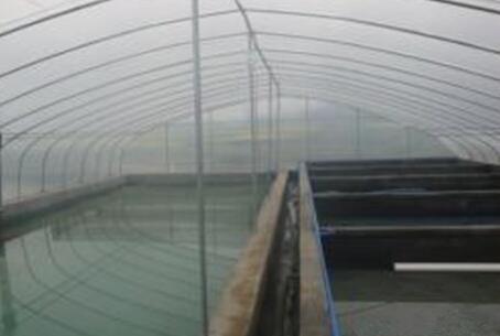 现在大棚养殖泥鳅技术有哪些?