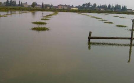 养殖渔业水质标准多少合适?
