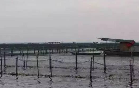 阳澄湖大闸蟹在那个城市?